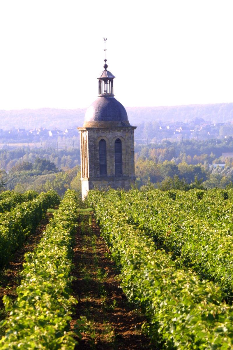 Rando Vignes de Vouvray